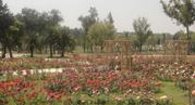 Rose-and-Jasmine-Garden